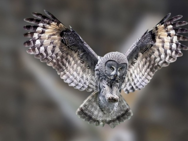 Picture courtesy of: http://newtopwallpapers.com/owl-p/